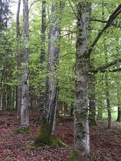 Buchenhain Schutzprojekt Naturkost UEbelhoer