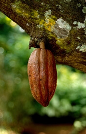 Kakao Fruch