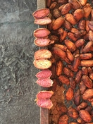 Kakao unfermentiert Bild Naturkost Group